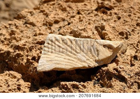 Close up of prehistoric fossil found in Negev.