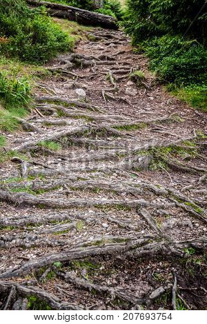 Path with roots out of the ground