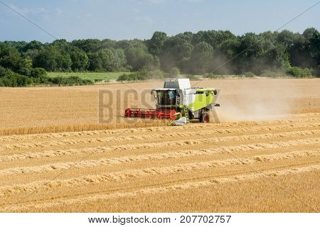 green red working harvesting combine in a field of wheat in front of a blue cloudy sky and green trees
