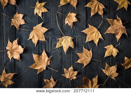 dry autumn leaves scattered on a dark background