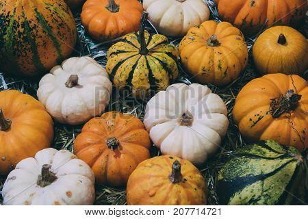 Pile of small decorative pumpkins diferent colours
