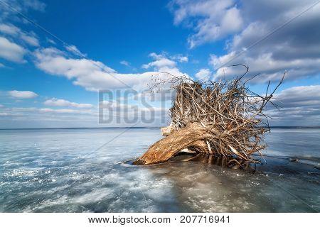 dead tree on ice / winter bright sunny day