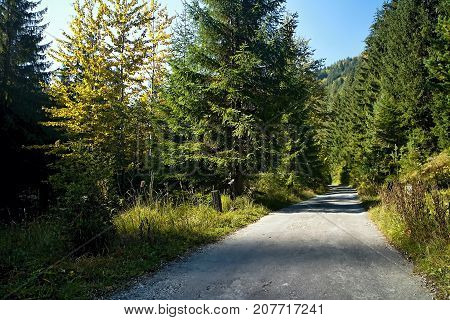 Ruzomberok - Cutkovska valley - walk through the valley with the surrounding nature. Trees the road shadow and grass