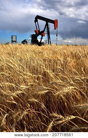 An image of an oil well pump jack in a wheat field.