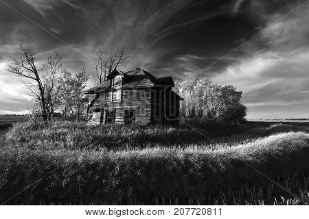 An image of an old abandoned homestead in the middle of a cut wheat field.