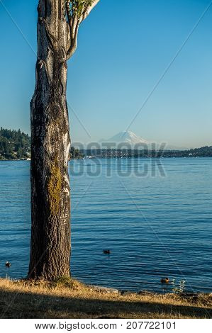 A view of Mount Rainier across Lake Washington. Shot taken at Seward Park in Seattle.