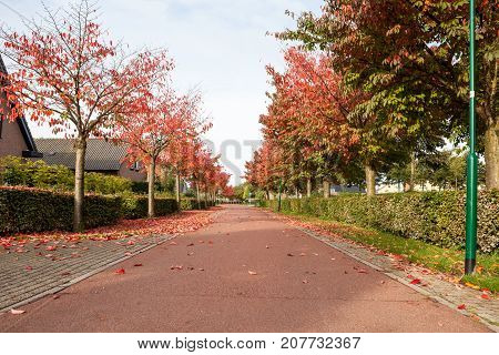 In a street there are many falling leaves of the trees