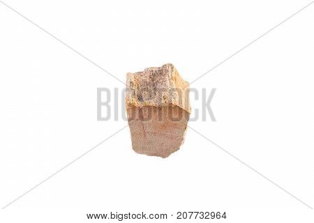 Petrified Wood Stone From Indonesia Isolated On White