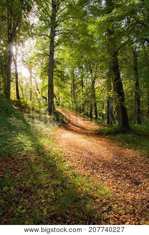 Amazing golden sunlight coming through trees and lightening up an autumn forest path. Good backround image