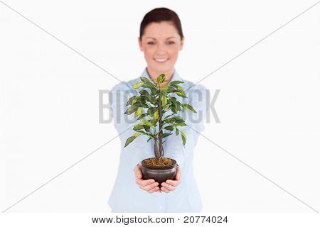 Gut aussehende Rothaarige Frau hält eine Zimmerpflanze stehen auf einem weißen Hintergrund