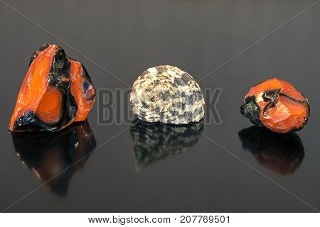 Shell and two red stones over black reflex background