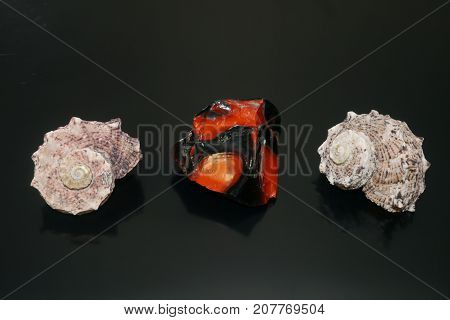 Two shells and red stone over black reflex background