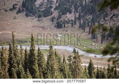 Kyrgyzstan. Gorge Barskoon. Beautiful view of the mountains covered with coniferous forest .