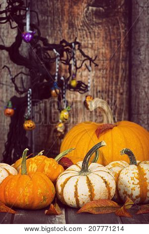 Pumpkin display with autumn leaves. Rustic wooden background with decorated Halloween tree.