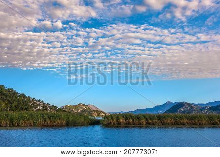 Water thickets of the Skadar Lake. Montenegro.