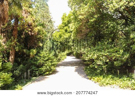Path in the botanical garden. Lush vegetation of the Nikitsky Botanical Garden in the Crimea.