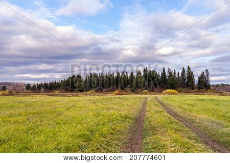 Path in the field leading to the forest on a cloudy day