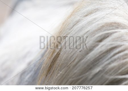 horse mane as background . Photo of abstract background