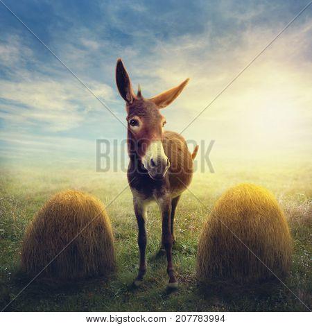 Buridan's ass between two piles of hay, paradox in philosophy