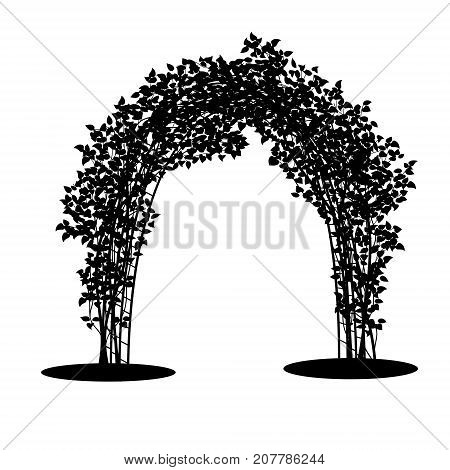 silhouette arch with bush clematis and green leaves on white background