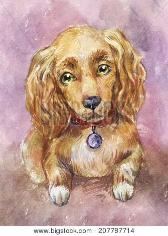 watercolor cocker spaniel dog illustration suitable for poster