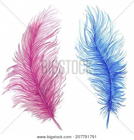 Watercolor drawing, feathers, blue feather, pink feather, composite pattern, ostrich feathers on white background, for graphics and decor