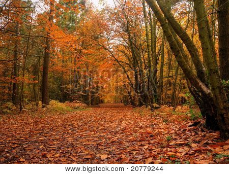 Beautiful Vibrant Autumn Fall Forest Scene In English Countryside Landscape