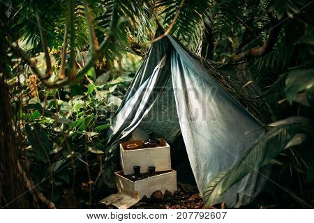 Misterious tent in jungle and old bottles in wooden boxes