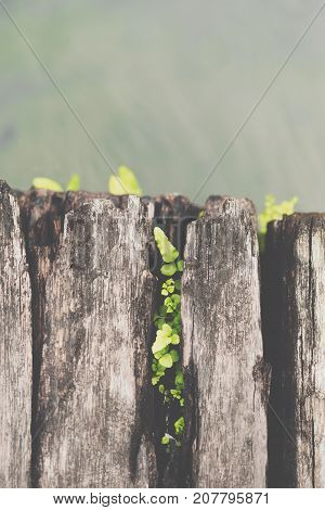 Fern Growth On Wood With Water In A Garden