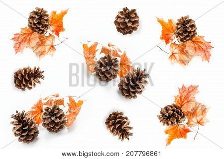 Bright colorful autumn leaves isolated on white background. pinecone.