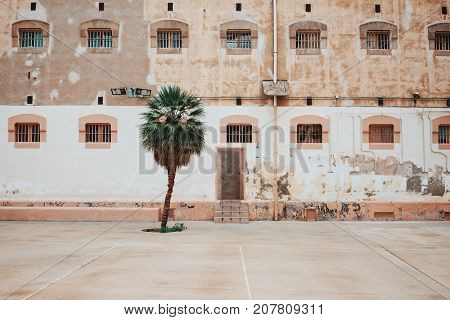 Lonely green palm tree grows in backyard of old prison with empty space little windows behind grates and flaky facade walls.
