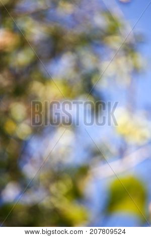 Bokeh from trees on blue sky in afternoon