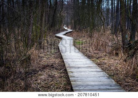 Wooden pathway in Kampinos National Park near Warsaw city in Poland