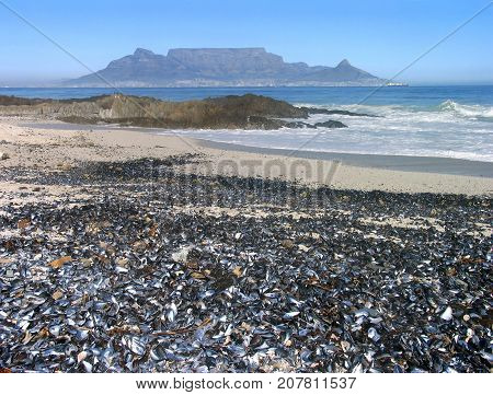 FROM BLOUBERG STRAND, CAPE TOWN, SOUTH AFRICA, WITH THE BEACH COVERED IN SEA SHELLS