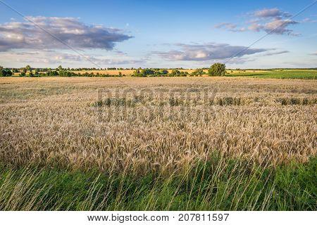 Fields near Gryfino small town in Poland