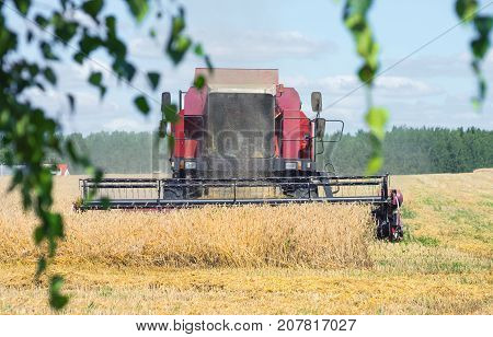 Harvester harvesting ripe rye in the field