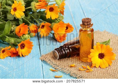 aromatherapy essential oil with fresh marigold flowers on blue wooden background. Calendula oil.