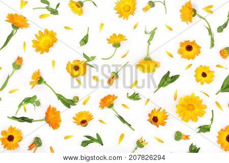 Calendula. Marigold flower isolated on white background with copy space for your text. Top view.