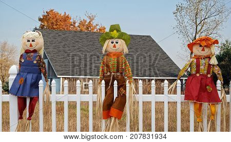 autumn scarecrow dolls on white fence with country barn background