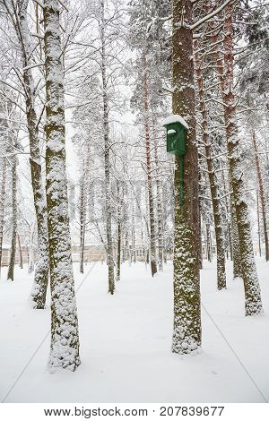 The trees in the Park in the snow. Beautiful winter tree and snow. Birdhouse hanging on a pine tree covered with snow and waiting for the birds.