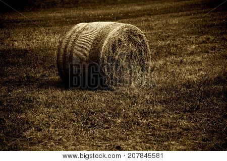 A harvested and mowed cornfield with a straw rolls on the mown field.