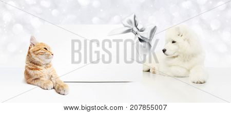 animals christmas theme cat and dog with gift card and silver satin ribbon bow