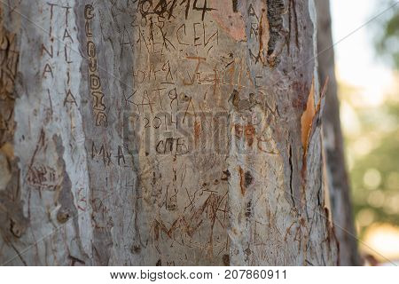 Vandalism At The Tree Bark In A Park. Spain.