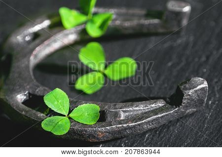 petals of shamrock and horseshoe with shallow depth of field