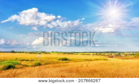 Landscape of gold field on bright sunny day. Blue sky with white clouds over yellow meadow