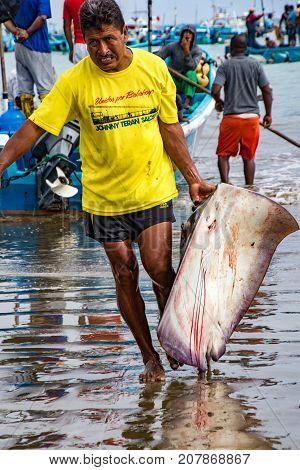 Man Drags Freshly Caught Flounder On Beach