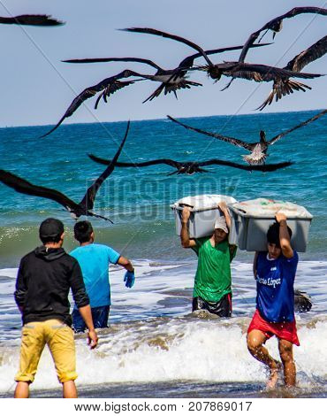 Fishermen Carry Bins Of Fish To Buyers, Chased By Birds Looking For An Easy Meal In Puerto Lopez, Ec