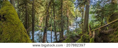 Panorama Of Moss Forest Below Sahalie Falls
