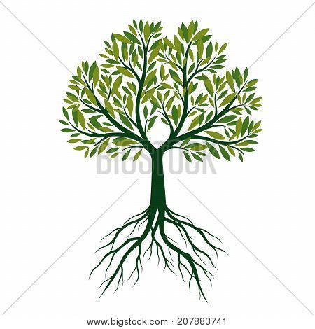 Green Tree with Roots. Vector Illustration and graphic elements