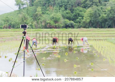 CHIANG RAI THAILAND - JUNE 16 : mobile phone used for shooting time lapse farmers in the rice field for stock photo industry on June 16 2017 in Chiang rai Thailand.